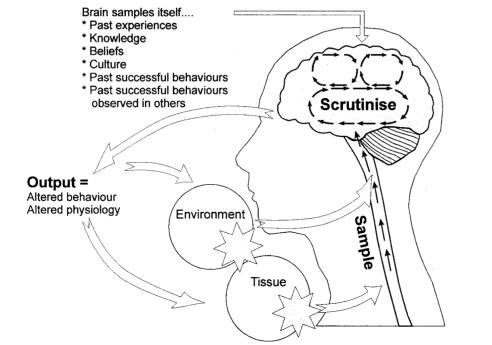 Source: Gifford L, The Mature Organism Model. http://giffordsachesandpains.files.wordpress.com/2013/04/mature-org-ch2-tip1.pdf