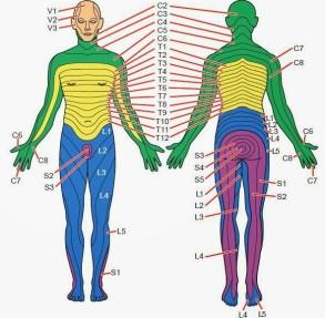 Dermatomes (1)